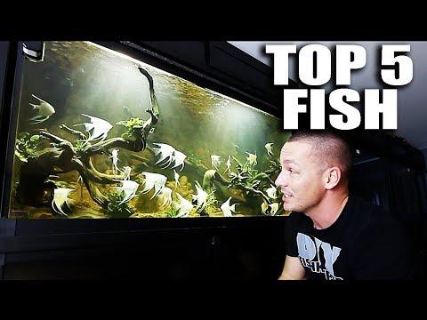 TOP 5 FISH IN MY AQUARIUMS