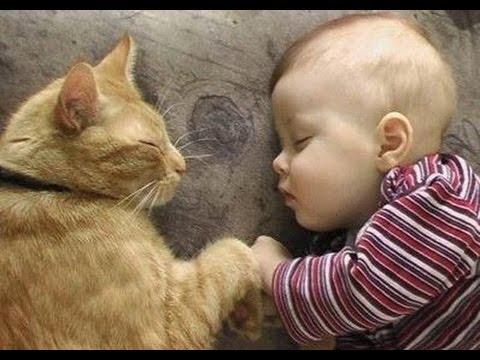 i 12 gatti babysitter più teneri del mondo