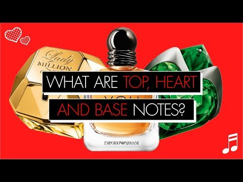 Top, heart and base notes: explained