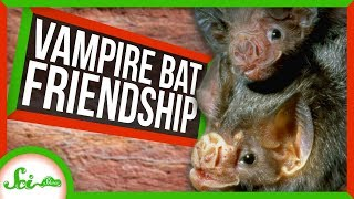 New Cancer Drug Results and Vampire Bat Friendships by  SciShow