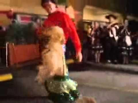 Baile em Dom Pedrito - Cachorro dançarino