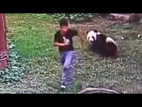 5 ШОКИРУЮЩИХ моментов в зоопарке снятых на камеру - DomaVideo.Ru