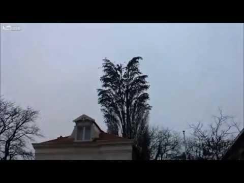 原本以為只是普通的樹與鳥  10秒後震驚了