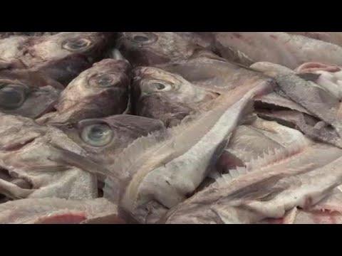 Schock für deutsche Nordseefischer: 40 Prozent weniger ...