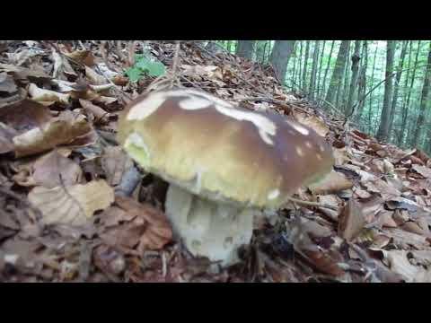 To je ale nádielka: Hubár zo Spiša objavil v lese miesto plné hríbov