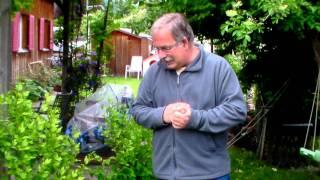 #367 Versuche mit Gemüsepflanzen (Paprika, Tomaten, Auberginen)