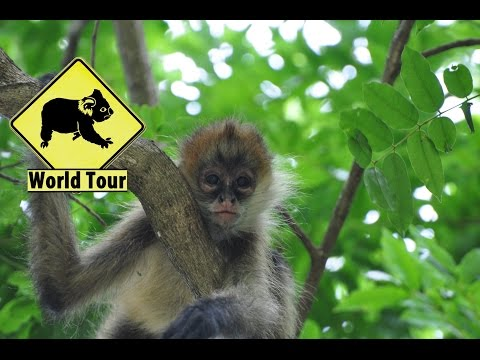 Voyage au Costa Rica, Le Parc Santa Rosa (Travel Costa Rica) Tour du monde (around the world) video