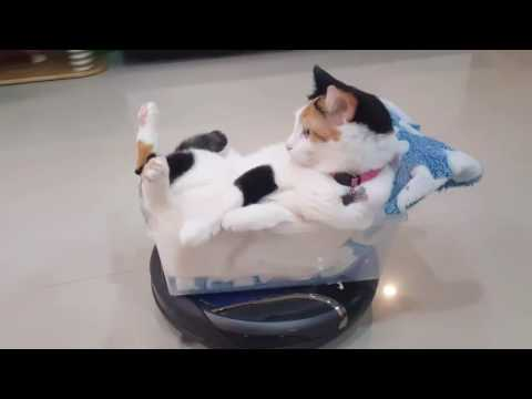 Cat Riding In Custom Cockpit Aboard Roomba