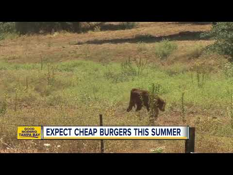 Expect cheap burgers this summer