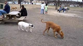 Sam at the dog park