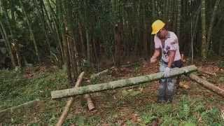 Promoting bamboo as a construction material. Researcher Links.