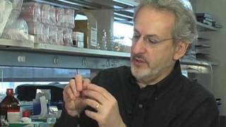 12/2: Don Ingber speaks at MIT on biomimetic microsystems