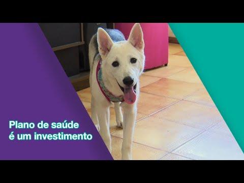 Materia especial com a Pet Health