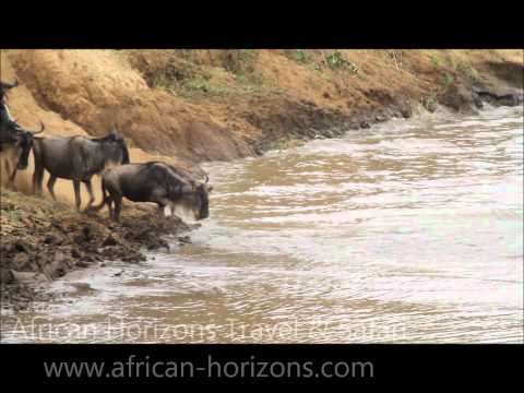 Wildebeests - Enjoy the Greatest Wildlife Show on Earth at the Masai Mara in Kenya and the Serengeti National Park in Tanzania. This is the best game watching experience a...