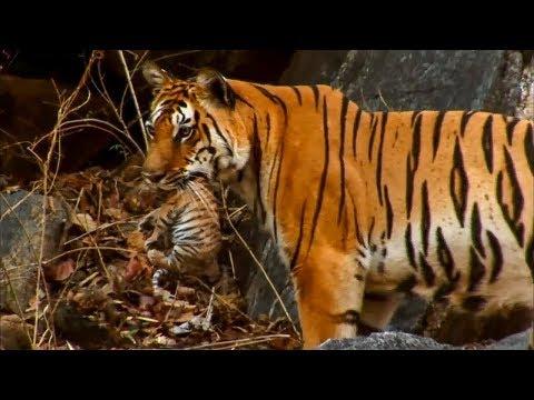 Hidden Camera Reveals Rare Animal Behaviors