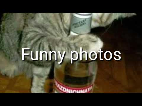 Funny videos ll funny photos ll Enjoy our video