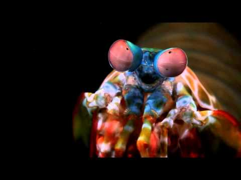 Edena izmed najbolj nenavadnih živali na Zemlji