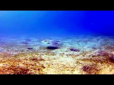 Diving Egypt 2015