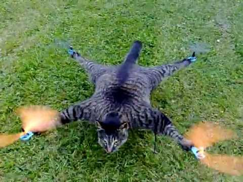 """Man stuffs his cat, attaches it to quad-copter. """"Orvillecopter"""""""