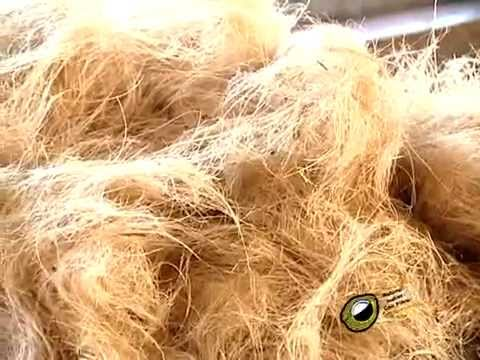 Lesson for Bleaching and dyeing of coir fibre