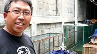 Video Terpecahkan MITOS MURAI BATU MEDAN bersama Erwin rispa kicau medan MP3, 3GP, MP4, WEBM, AVI, FLV April 2019