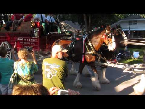 BUDWEISER CLYDESDALES 12 Aug , 2015 019