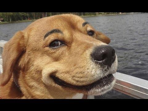 讓狗狗來告訴你!所謂眉毛的重要性....