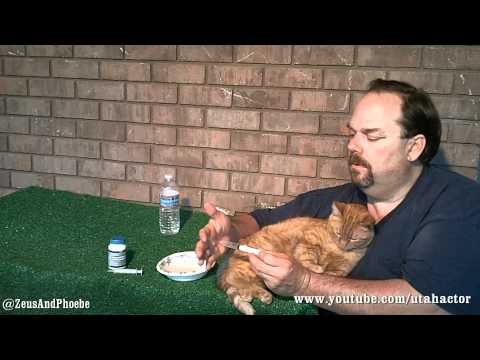 remineralizes - Cat Health, Naturally: Day Six - Treating Ear Yeast Infection, S01/Ep06. In this webisode I discuss and demonstrate two natural products I am using to treat ...