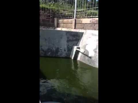 Sangkuti Catfish farm (budidaya lele sangkuriang
