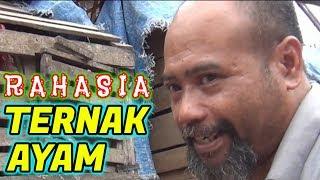 Video Pak Ndul - RAHASIA TERNAK AYAM MP3, 3GP, MP4, WEBM, AVI, FLV Mei 2019