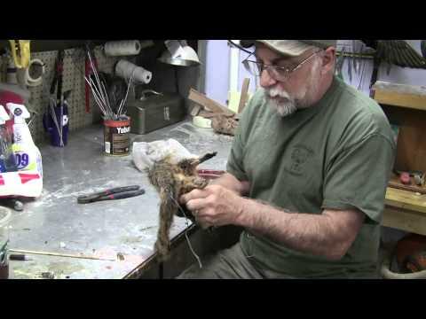 Testas Tuesdays Tips Squirrel Mount Part 1