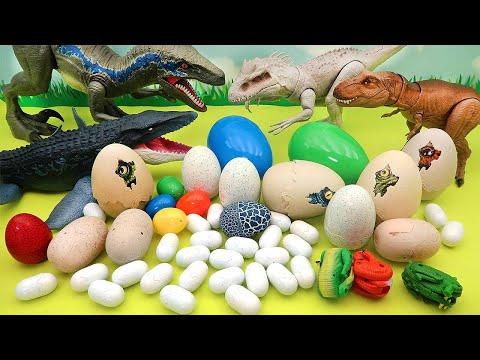 Dinosaur Egg Collection! - Jurassic World Egg, Mini Dino Egg, Transformer Egg