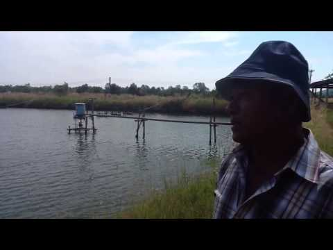 Shrimp Farming part 2/2