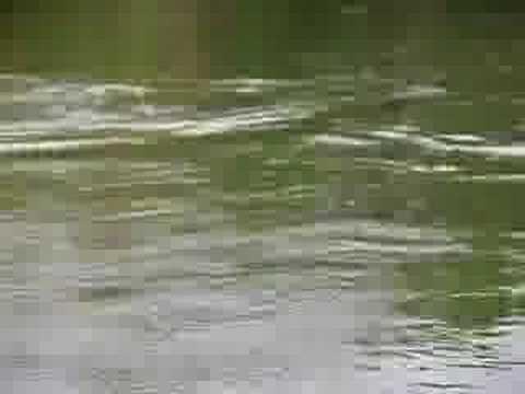 pescaria rio culuene mato grosso