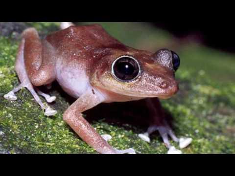 le rane più belle e velenose del mondo