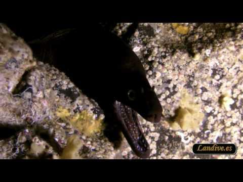 L A N D I VE . E S - Scuba Submarinismo La catedral HD