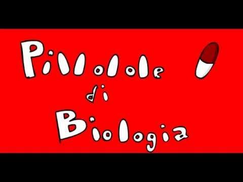 Pillole di... Biologia #5 (Il DNA)