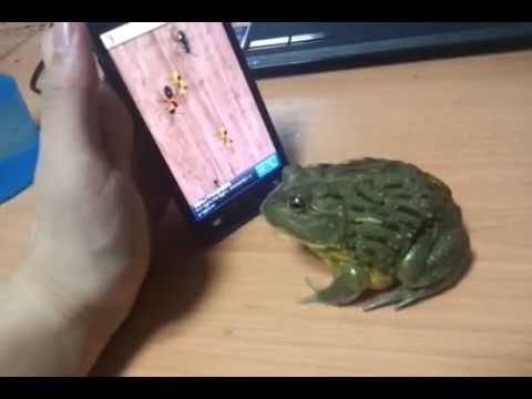 Hızını Alamayan Kurbağa