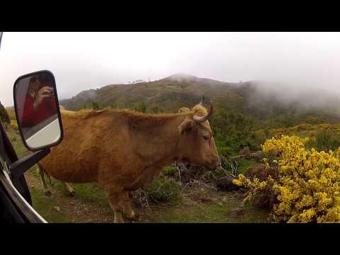 Volta Ilha da Madeira em Land Rover