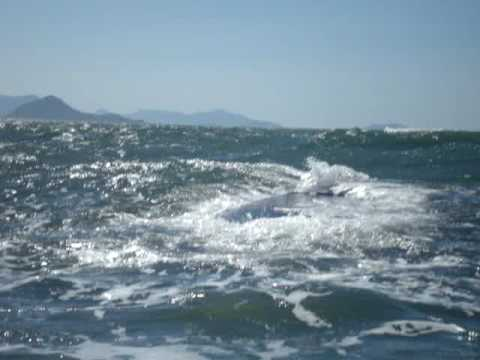 Baleia Franca em Garopaba