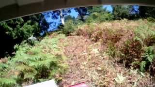 Kurrajong Australia  city images : Tough Cut clearing Bracken Fern and Blackberry bush in Kurrajong Heights NSW