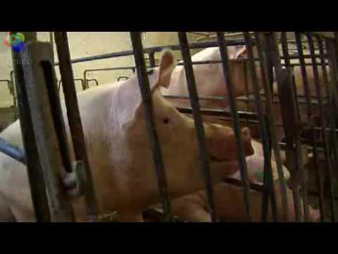 Pork Employment Opportunities