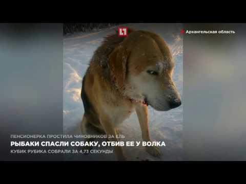 новости рыбак собакой