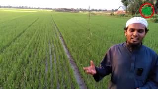 Modern Rice cultivation system: Logo System