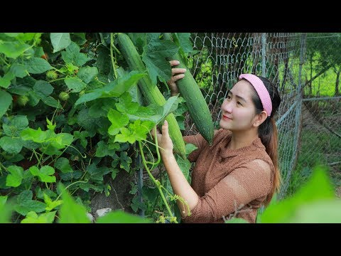 Yummy Spong Gourd Soup Cooking - Pick Spong Gourd For Soup - Cooking With Sros