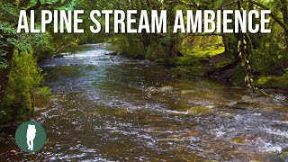 Tasmania Alpine Stream Ambience in 4K, 1 Hour Ambience Relaxation