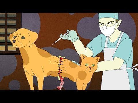 SCIENTIFICALLY ACCURATE™: CATDOG
