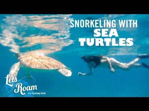 St. Thomas    Snorkeling with Sea Turtles