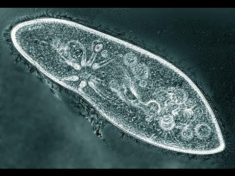 Что можно посмотреть в микроскоп в домашних