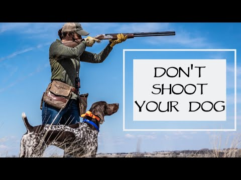 Don't Shoot Your Dog - You Ask We Answer Episode 9